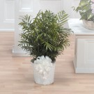 Areca Palm Plant Basket